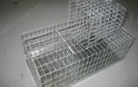 birds-trap